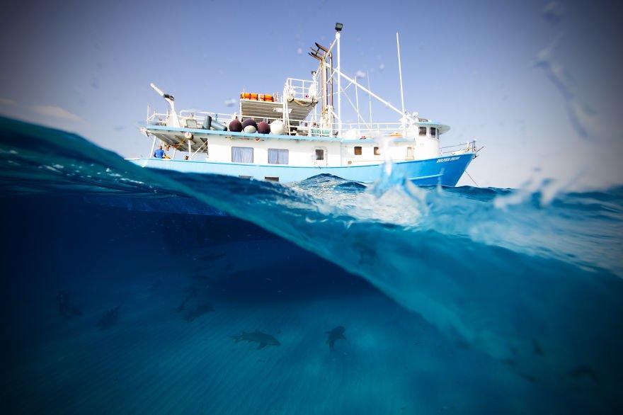 เปิดโลกใต้ท้องทะเล โดย Jorge Cervera Hauser