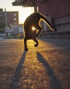 Hisakata Hiroyuki ช่างภาพชาวญี่ปุ่นถ่ายภาพแมวนินจา แบบPurr-fect